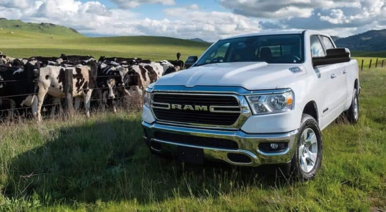A white 2021 Ram 1500 Big Horn is parked in a field next to a group of cows.